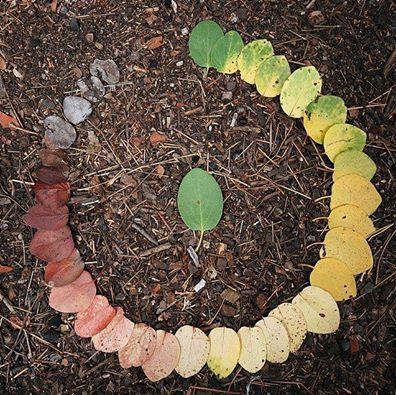 circle-of-life